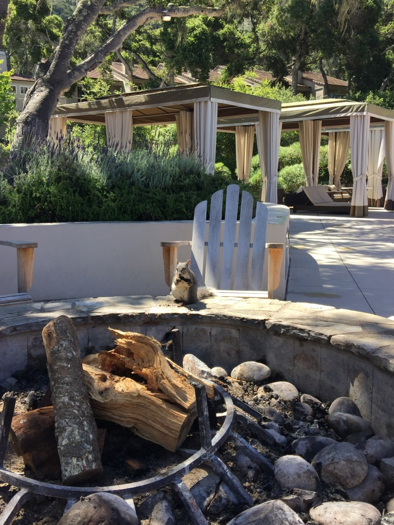 Image Result For How To Make A Fire Pit In The Grounda